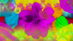 Generative Flowers II